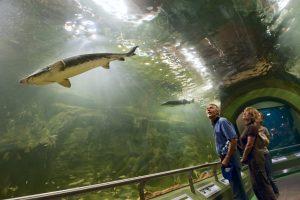 Kirándulás a Tisza-tavi Ökocentrumba